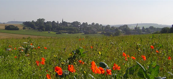 Village and Poppies